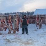 после ВСЭ мяса северных оленей. Белобородов А.В.