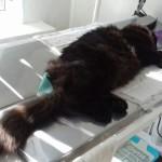 Лечение - отравления кота