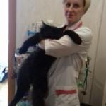 Подготовка кота к осмотру в-врач Феклистова Микаэла Тареловна