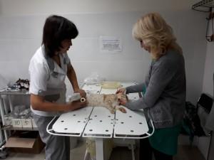 Фото процесса работы лечебного отдела