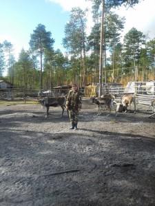 весенние ветпрофмероприятия 2017 оленеводческое стойбище п. Аган