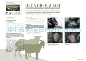 Оспа овец и коз