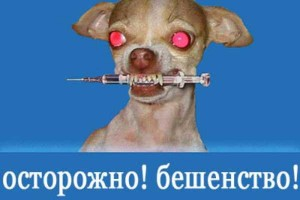 pravila-vakcinacii-sobak-ot-beshenstva-v-rossii_4