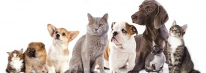 Cats-and-Dogs-OLS-image