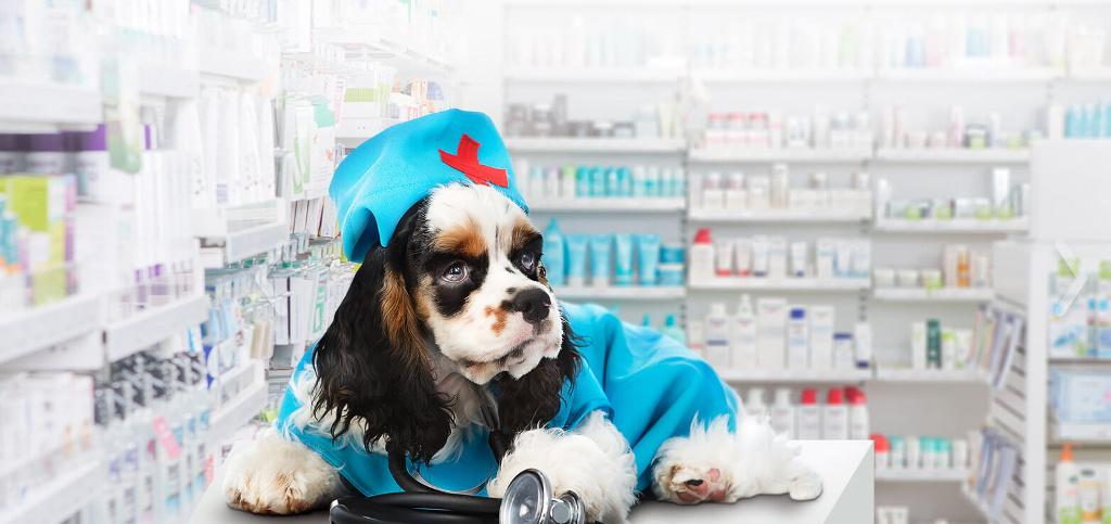 собака аптекарь